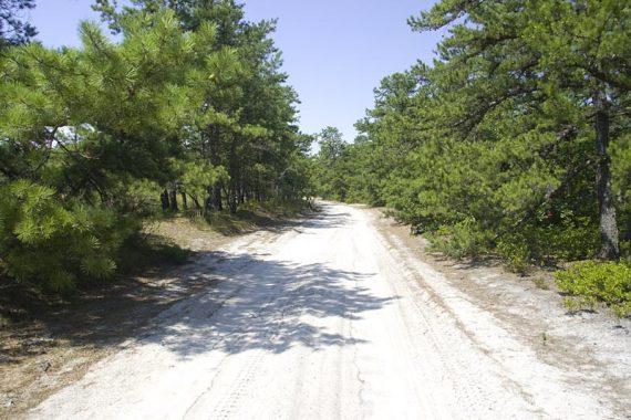 Batona Trail follows sand roads in places