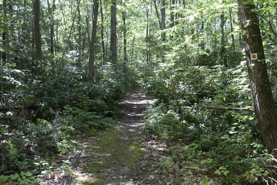 Pumphouse trail is a old woods road