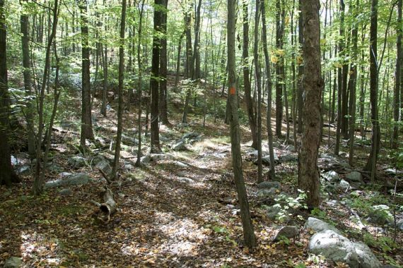 08Wanaque Ridge Trail