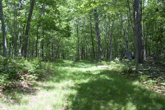 Pine Swamp Trail