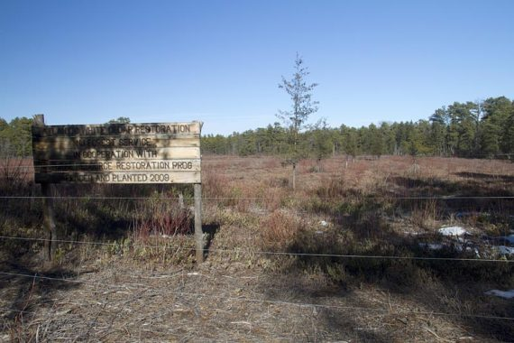 Forest replanting