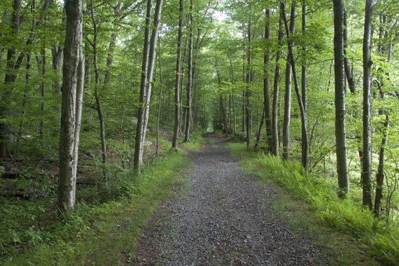 Ogden Mine Railroad rail trail