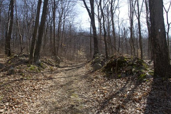 WHITE trail, in March.
