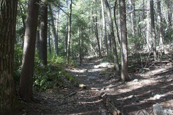Hoeferlin Trail