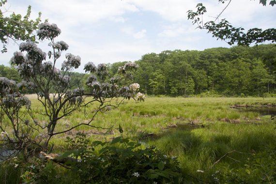 Swamp along Ogden Mine railroad