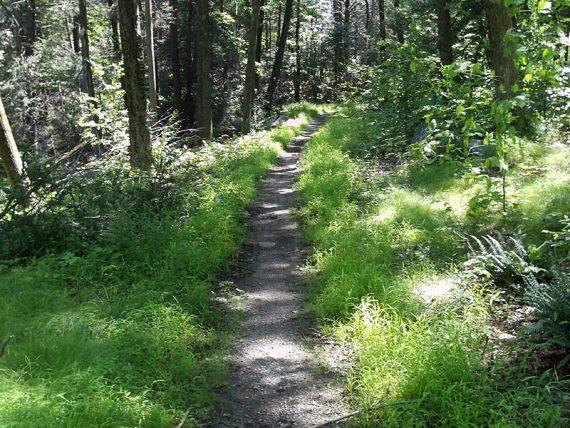 Laurel Pond trail