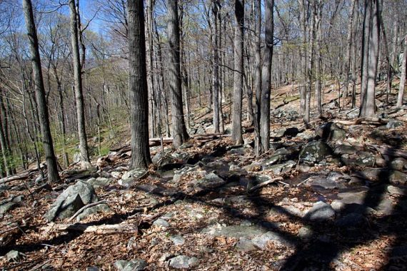 Rocky trail surface