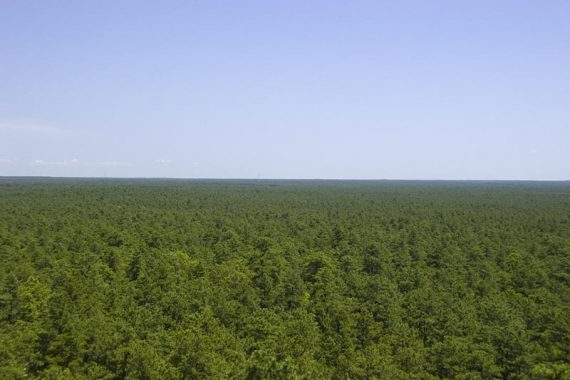 Looking over a vast Pine Forest from a fire tower