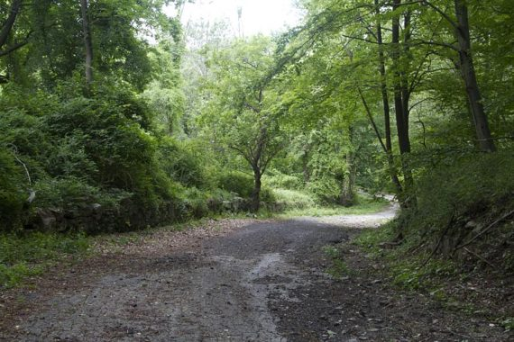 Woods road through Doodletown