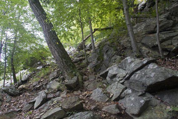 Carris Hill trail