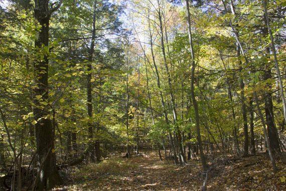 Bare Rock trail