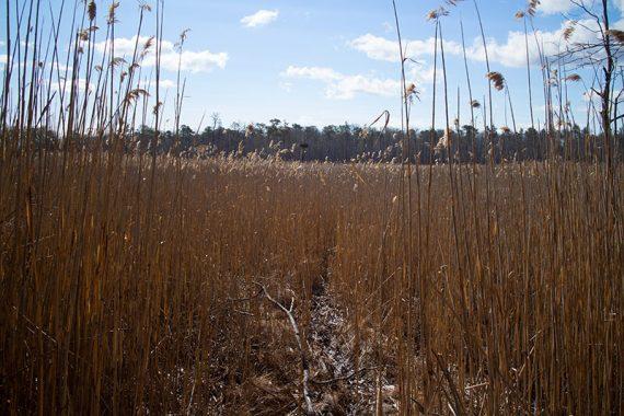 RED trail. One of many osprey nesting platforms.