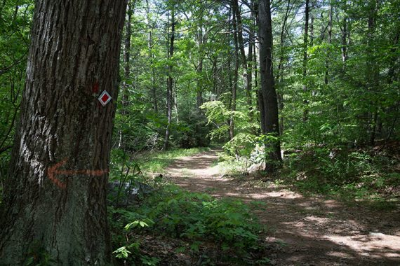 Turn on to Lookout Trail (White)
