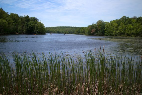 Lake with grasses in the foreground