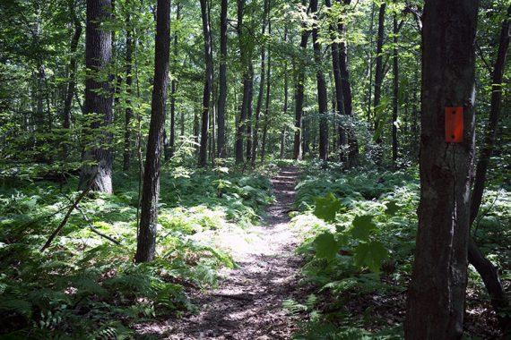 ORANGE trail.