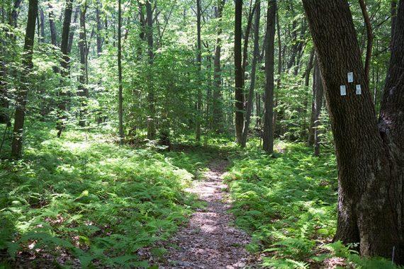 WHITE trail.