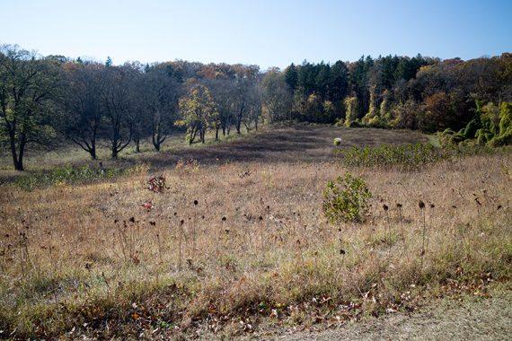 Fields along County Gait