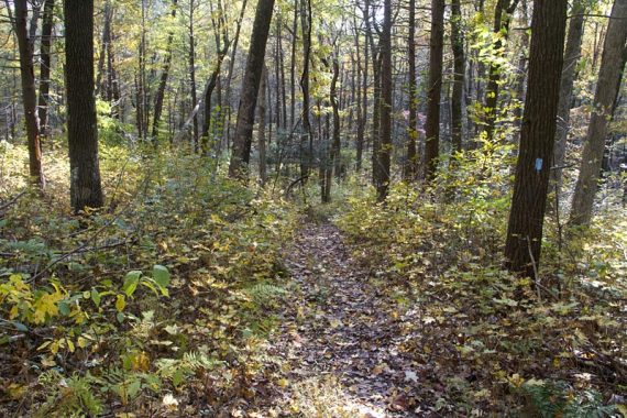Jenny Jump Trail