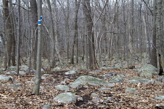 BLUE w/ WHITE STRIPE trail