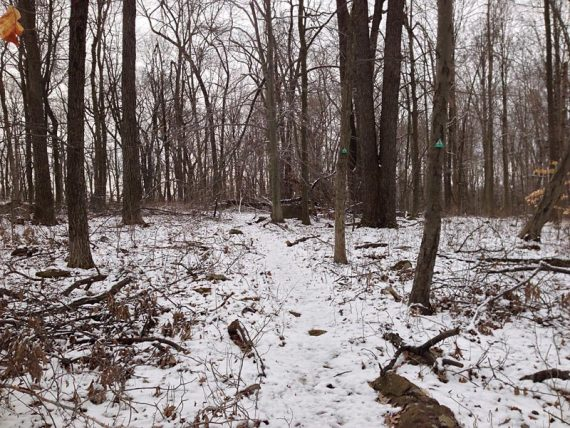 Sourlands Ecosystem Preserve - ORANGE Trail (the markers look yellow)