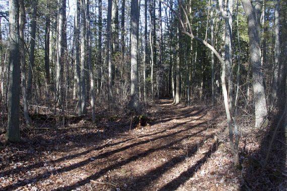 East Creek Trail