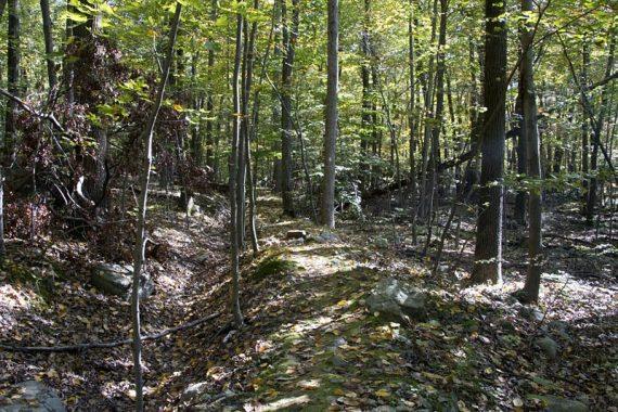 Berm on Four Birds Trail