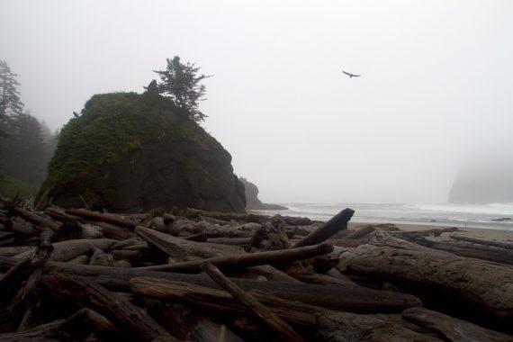 Fogged in Second Beach