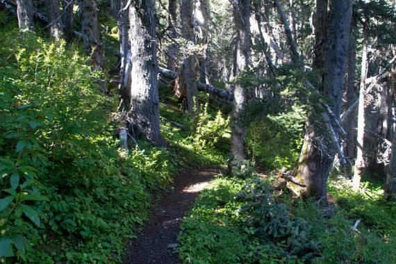Hiking back from Grand Lake