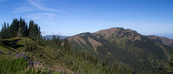 View of Hurricane Hill from Cirque Rim trail