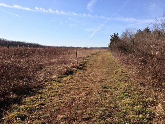 Meadow-Pond trail