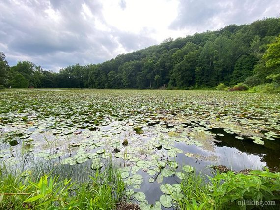 Ghost Lake filled with lily pads