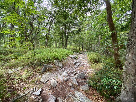 Very rocky Appalachian Trail