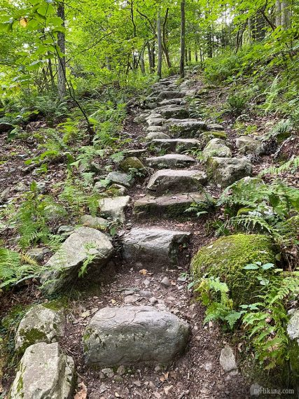 Large stone steps on a trail surrounded by green trees