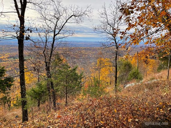 View of a fall foliage covered valley through trees