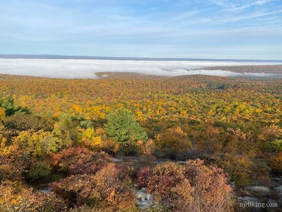 View over fall foliage in Stokes Forest