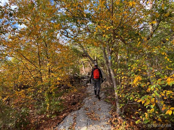 Yellow fall foliage on a rocky trail