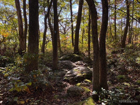 Shady trail with large rocks