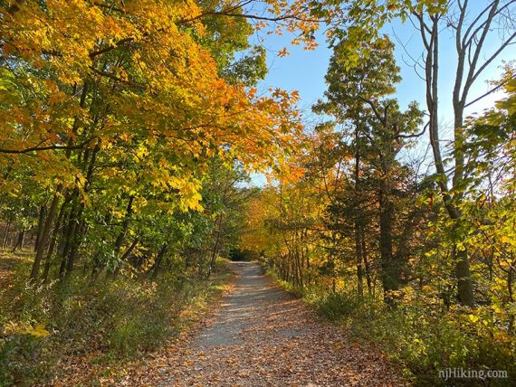 Wide level path surrounded by fall foliage