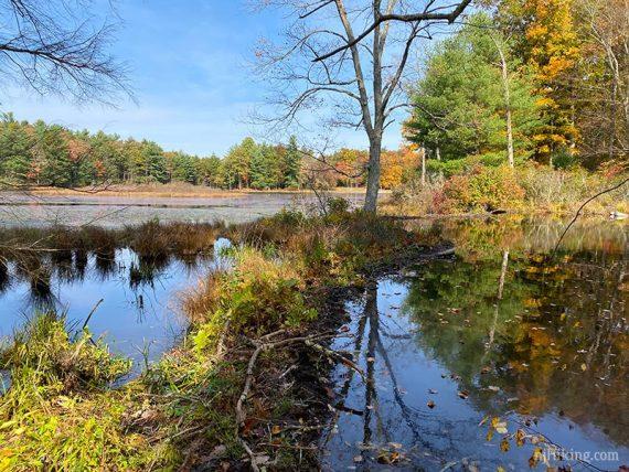 Beaver dam on lake