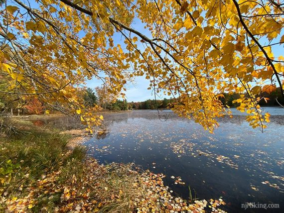 Bright yellow leaves over the edge of a blue lake