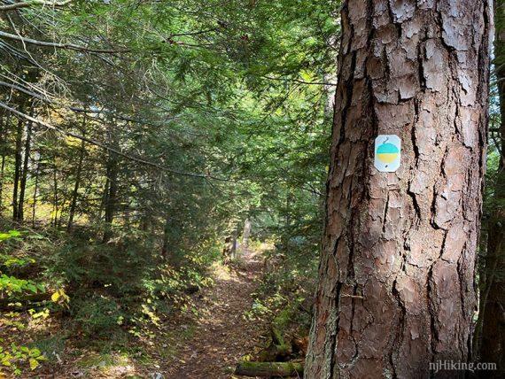 Split color trail marker on tree