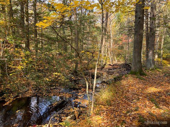 Leaf covered stream and trail