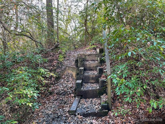Wooden steps on a trail