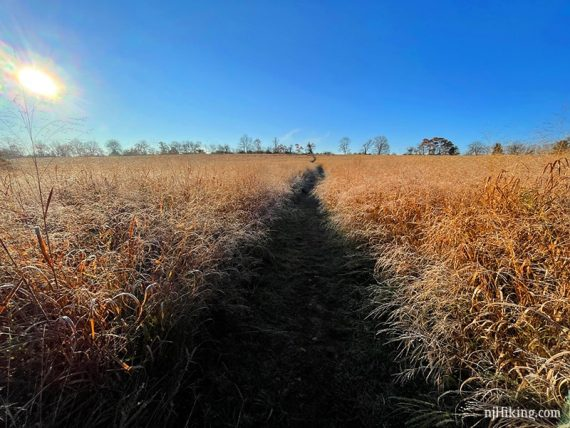 Path through a field of high grass