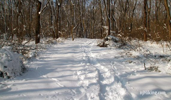 Forested trail with snowshoe tracks