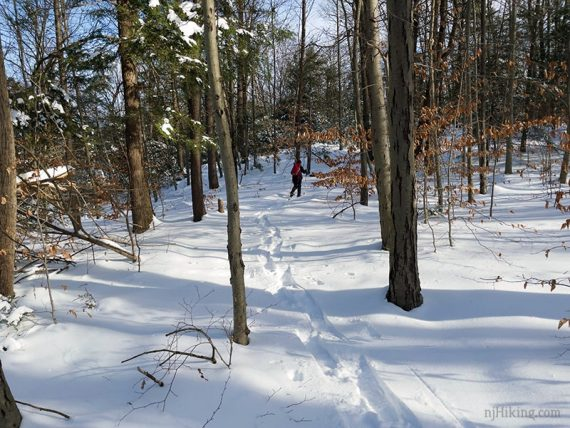 Snowshoeing through a forest