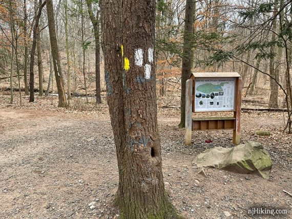 Map kiosk near yellow and white blazes on a tree