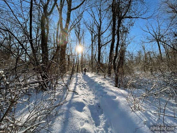 Snowshoer on a sunny trail.