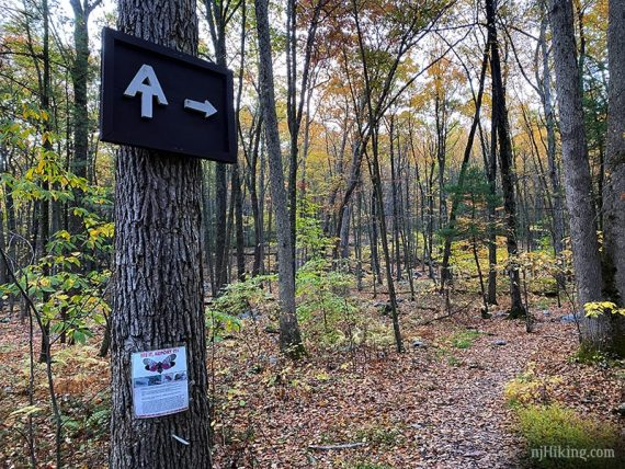Appalachian Trail logo and arrow sign on a tree