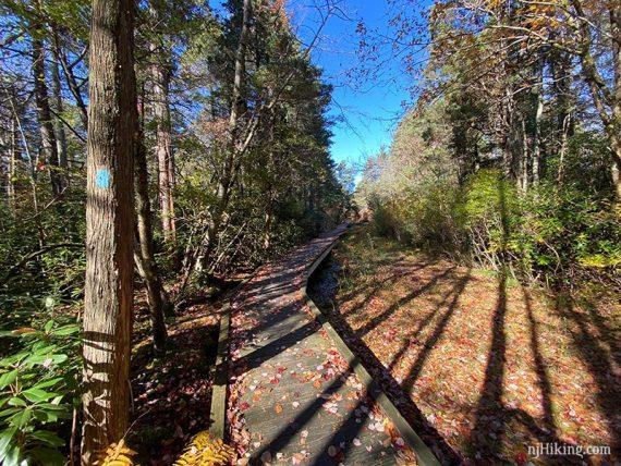 Boardwalk over a cedar bog